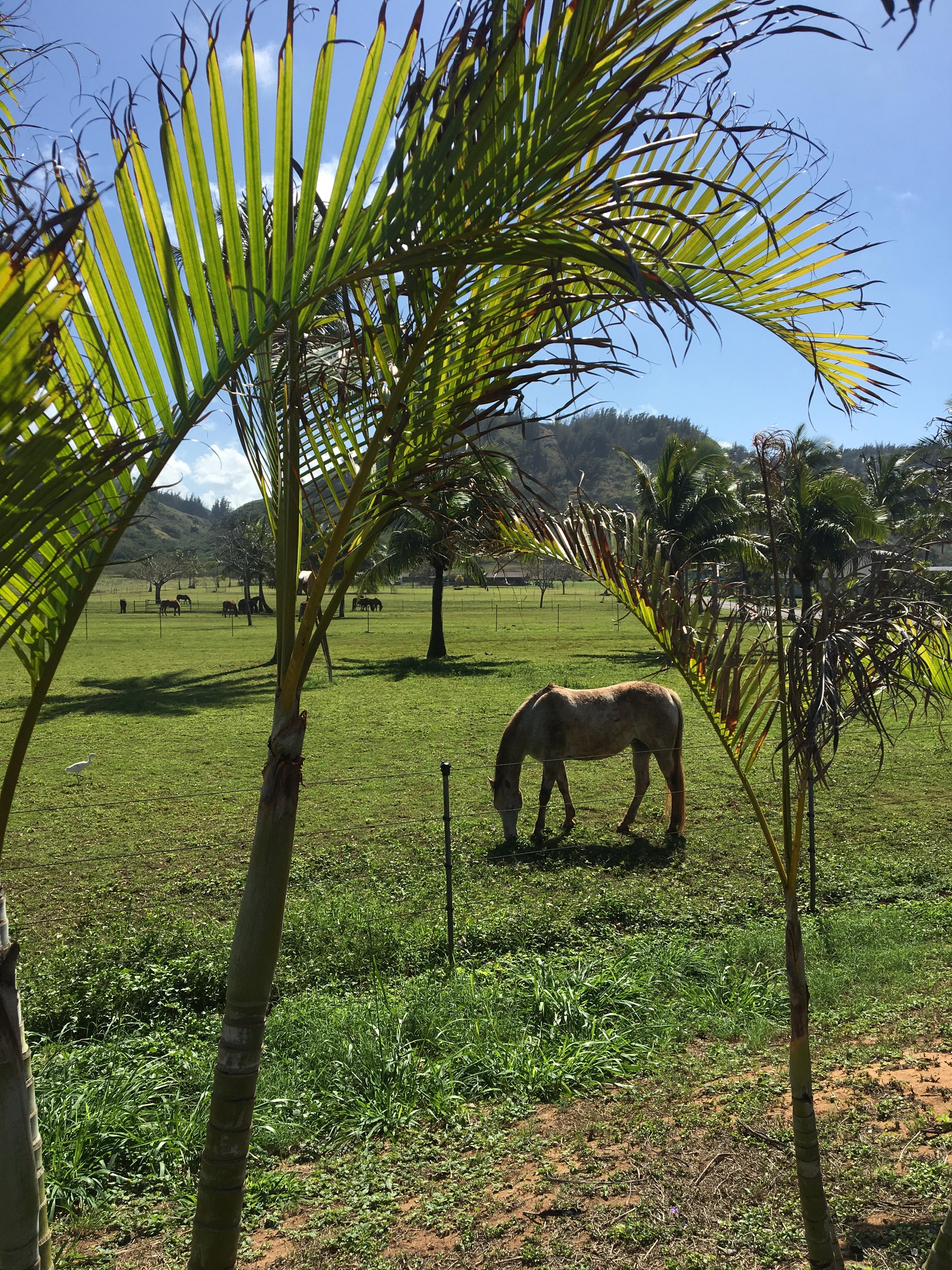 Horse ranch in Oahu's NorthS Shore, Hawaii